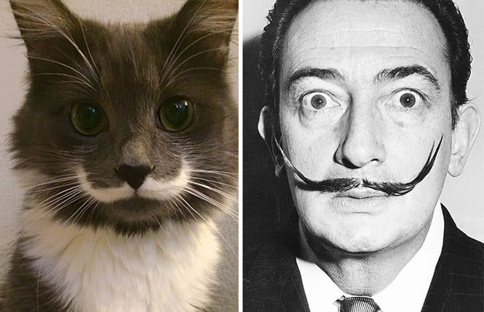 Salvador Dali and a cat
