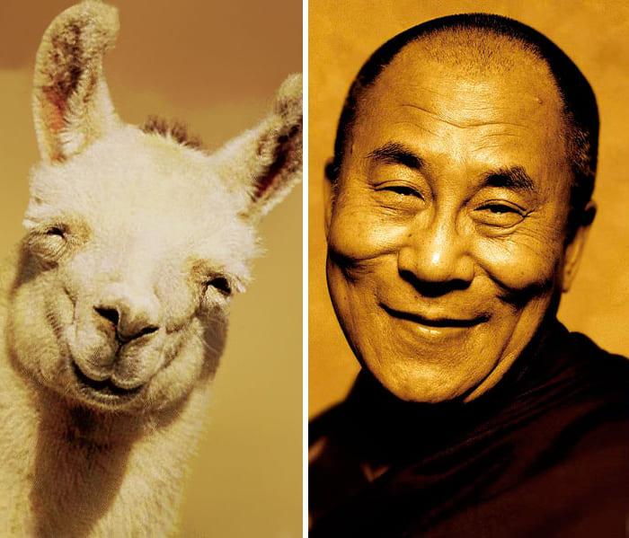 Dalai Lama and a llama