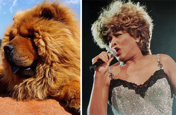 Tina Turner and a Dog