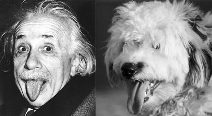 Albert Einstein and a Dog