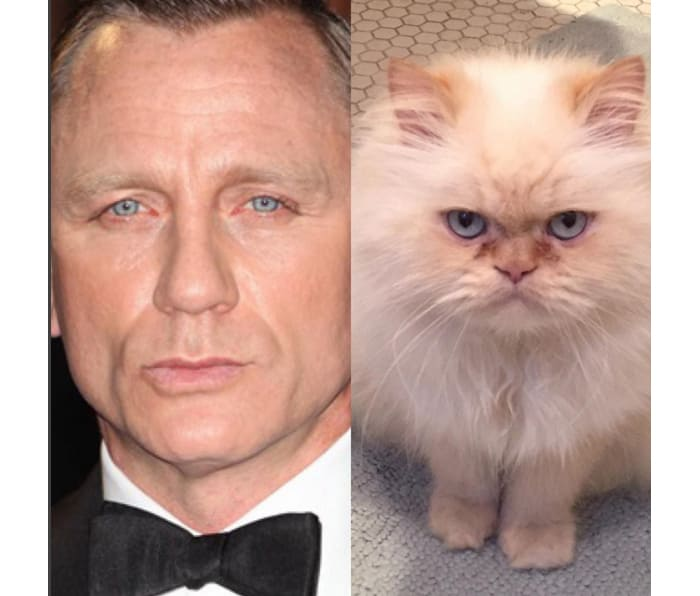 Daniel Craig and a cat