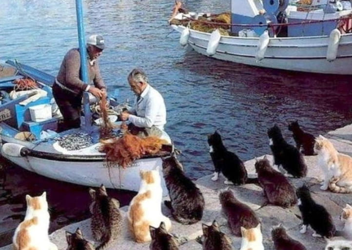 Cats surrounding a boat