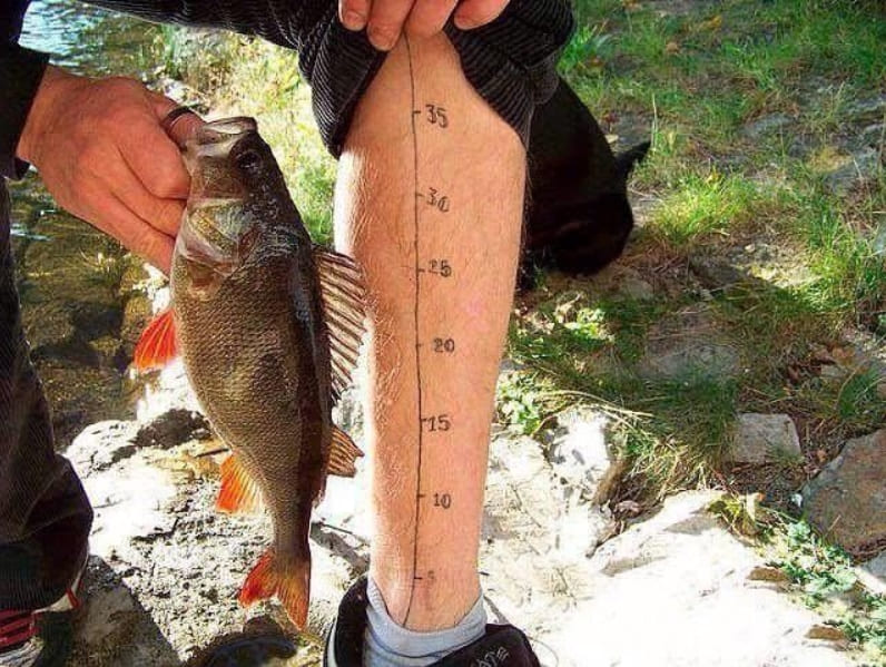 A fish next to a measuring tape leg