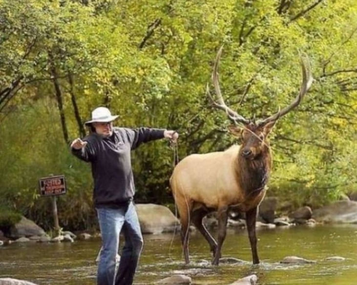 A man and a moose