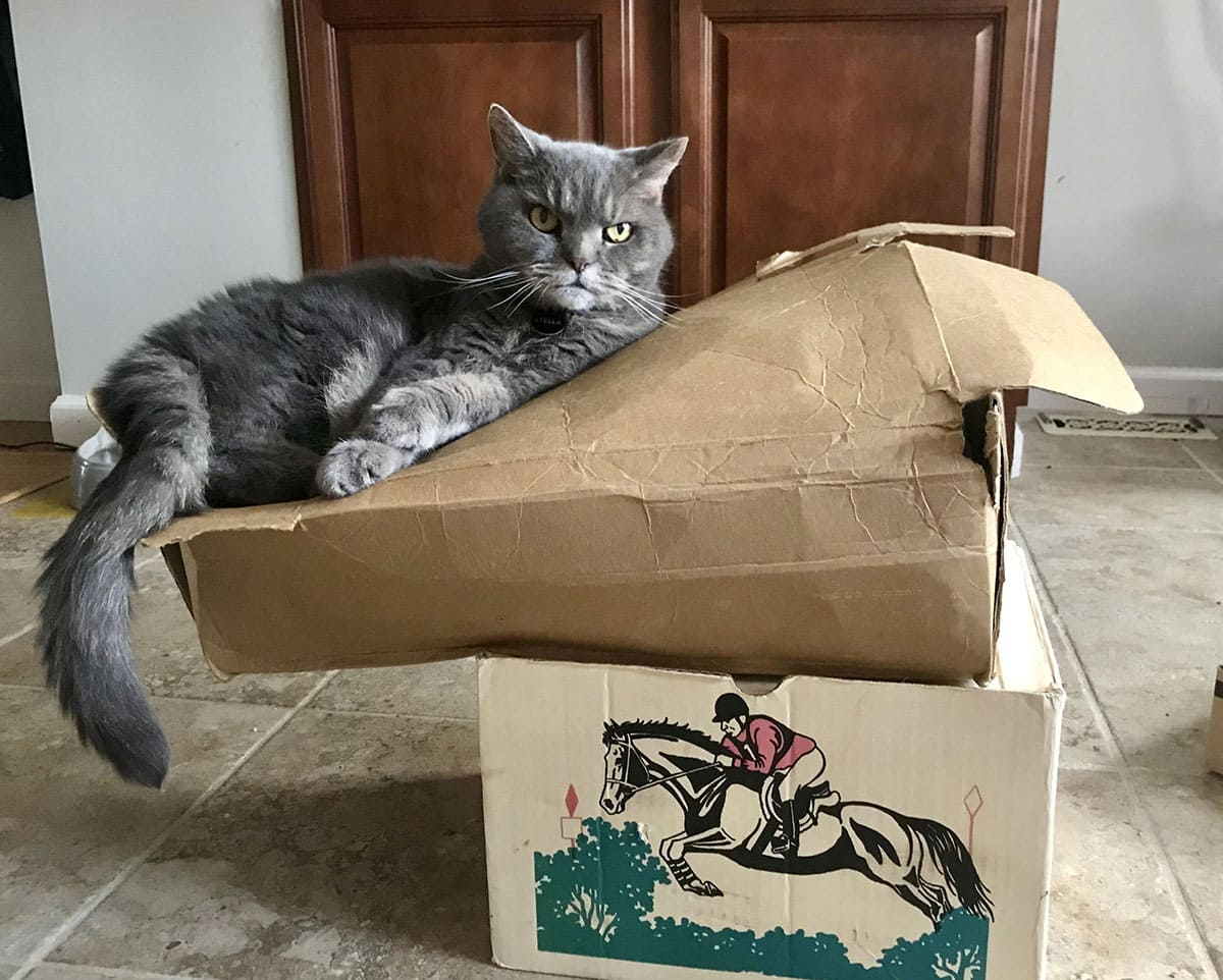 A cat sleeping on a box