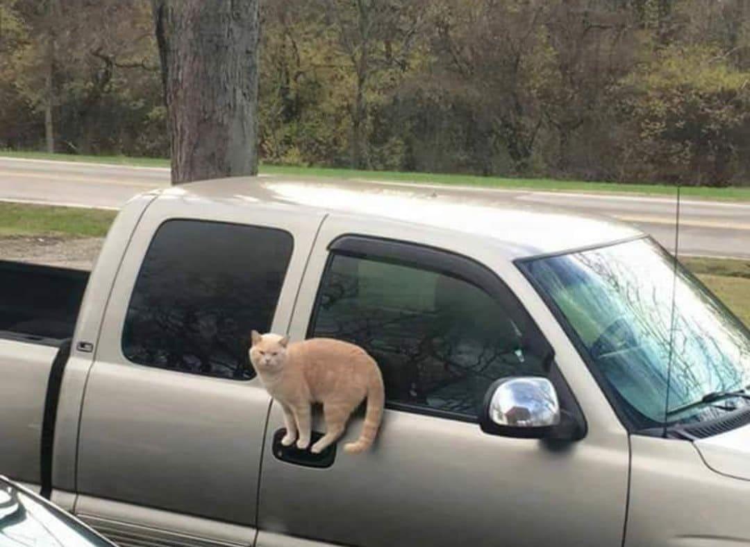 Cat standing on a door handle of a car
