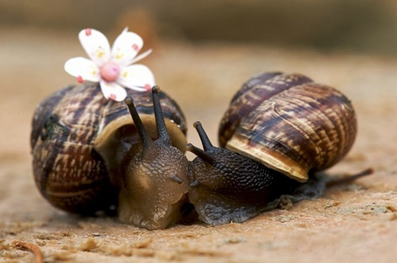 Two snails, one with a flower on his back