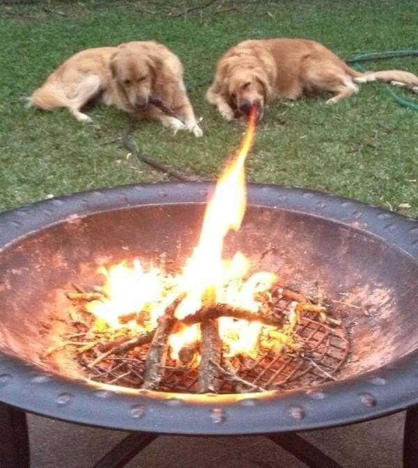 Dogs and a bonfire