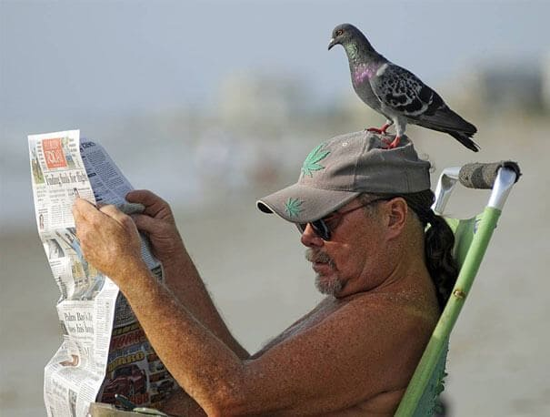 Bird sitting on a man's head