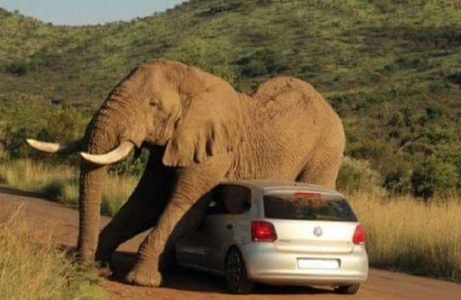 Elephant on top of the car
