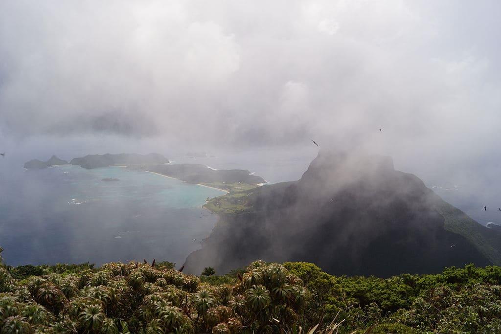 Fog on the Island