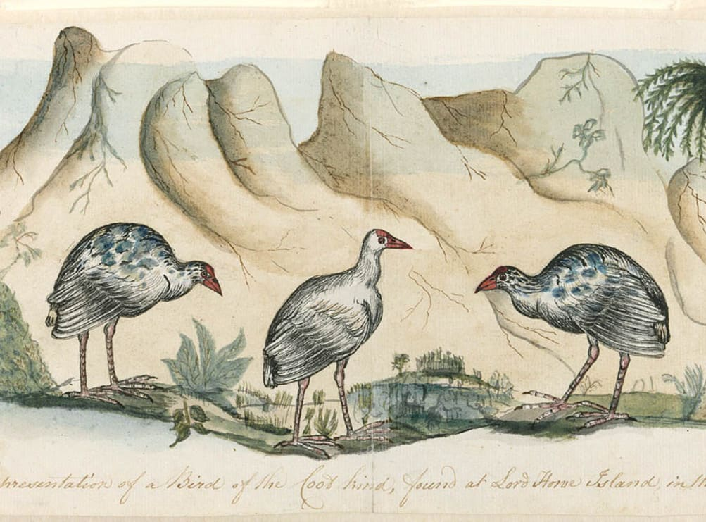 Picture of native island birds
