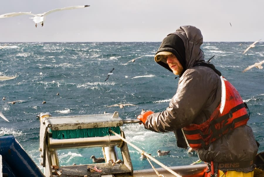 Fisherman working hard during the day with seagulls flying around.