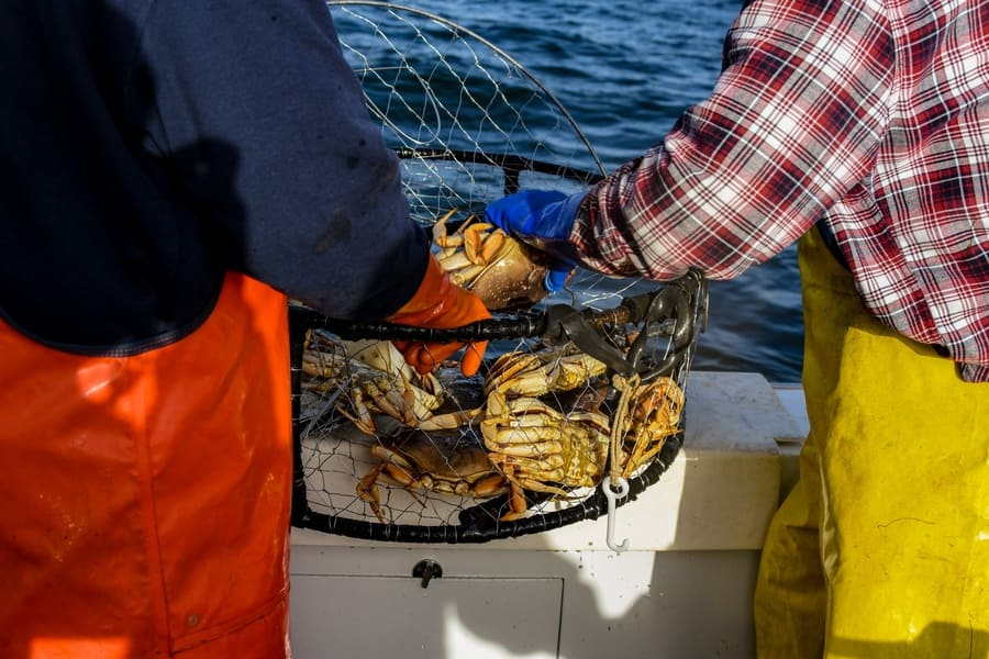 Two men checking the number of crabs they caught.