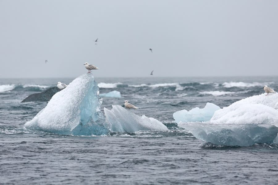 Photograph of icebergs with seagulls flying around them.