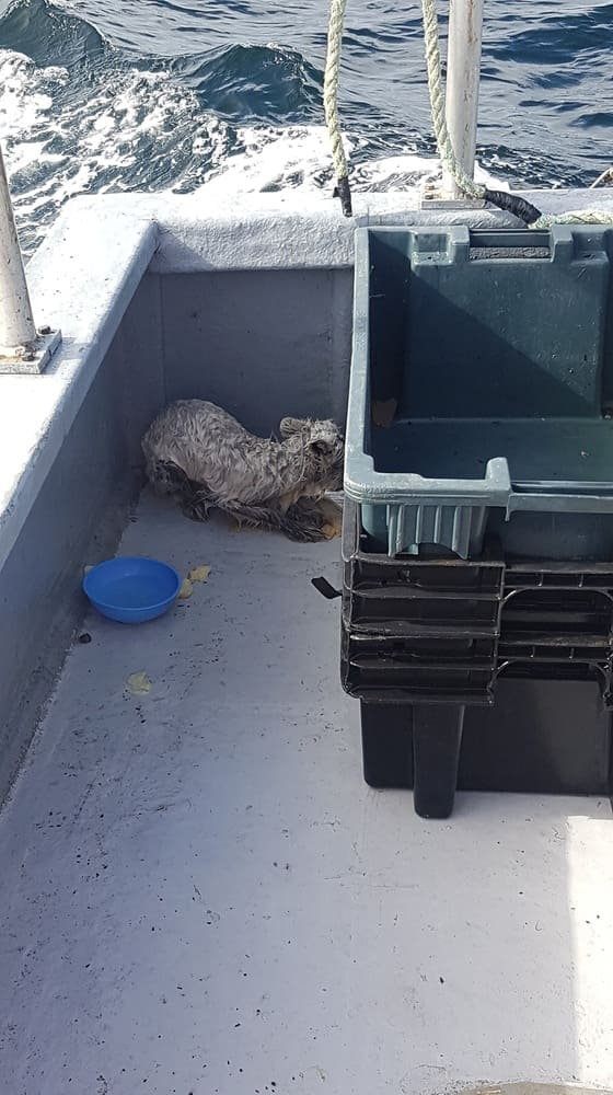 Photograph of the fox in the corner of the fishing boat.