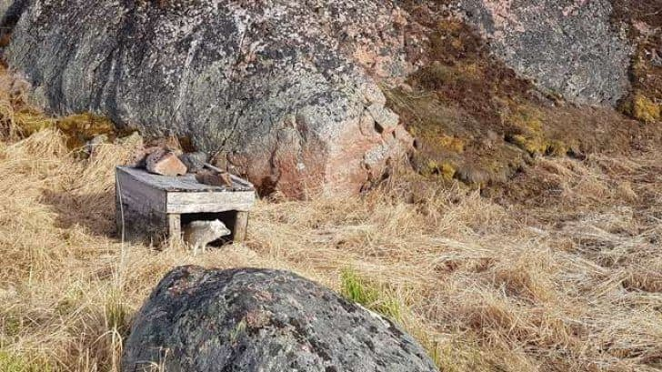 Photograph of a little dog house with a fox inside.