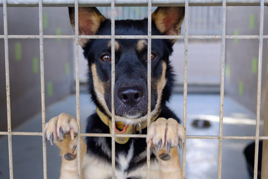Dog sad sitting in a cage in a dog kennel.