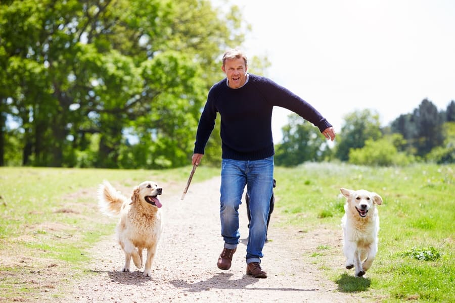 A man running with two dogs on a countryside walk.