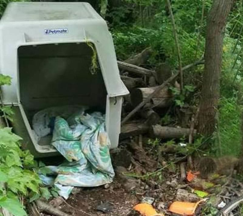 Photograph of a travel cage for dogs in the woods.