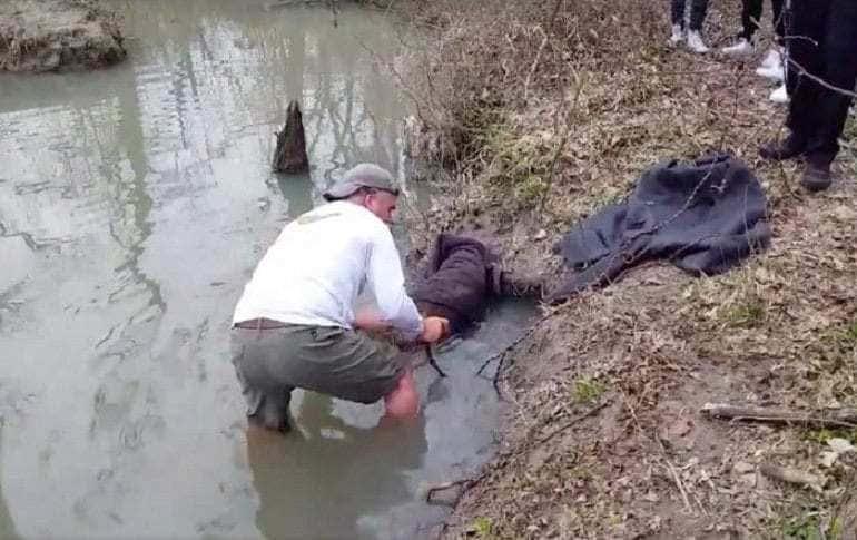 Jim Passmore helping the stuck animal.
