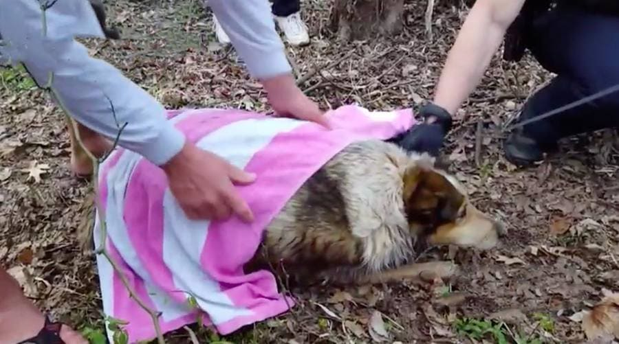 Photograph of a girl cleaning the dog off with a pink and white towel.