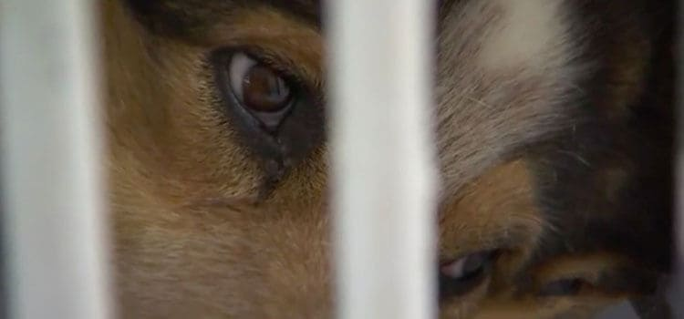 Photograph of Teddy's eyes from behind bars with OAA.