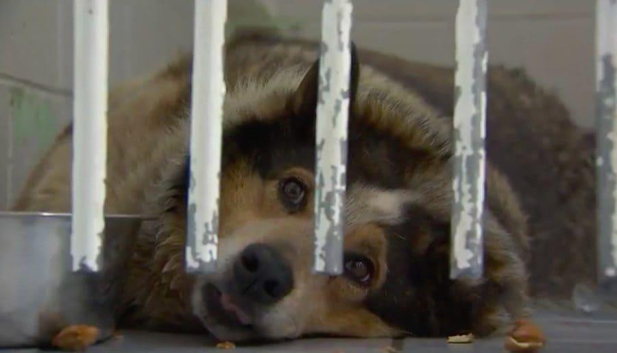 Teddy behind bars smiling.