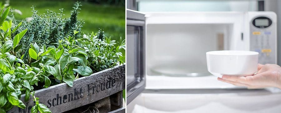 Assorted fresh herbs in a garden. / Photograph of someone placing a bowl into the microwave.