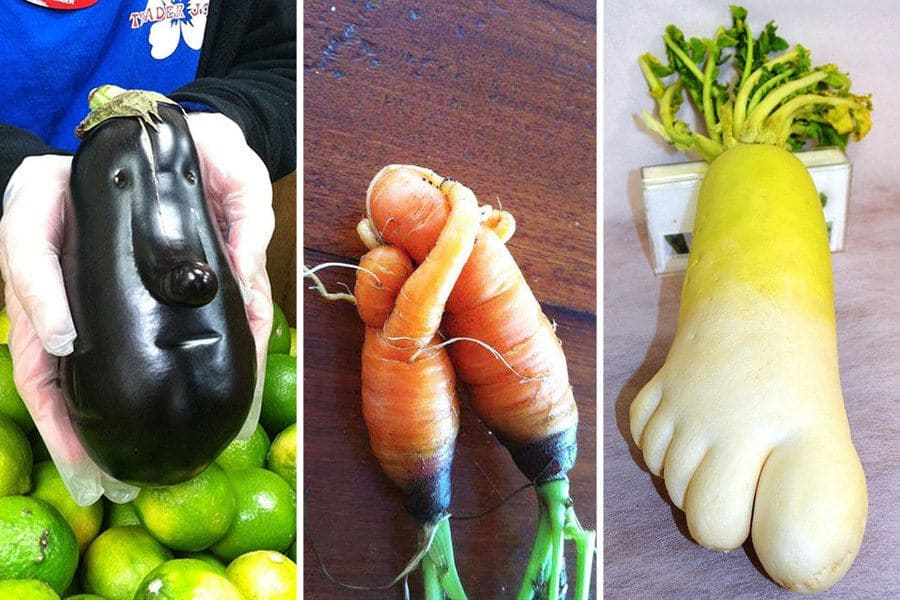 An eggplant that looks like it has a face / Carrots that look like they are hugging / A radish that looks like a foot