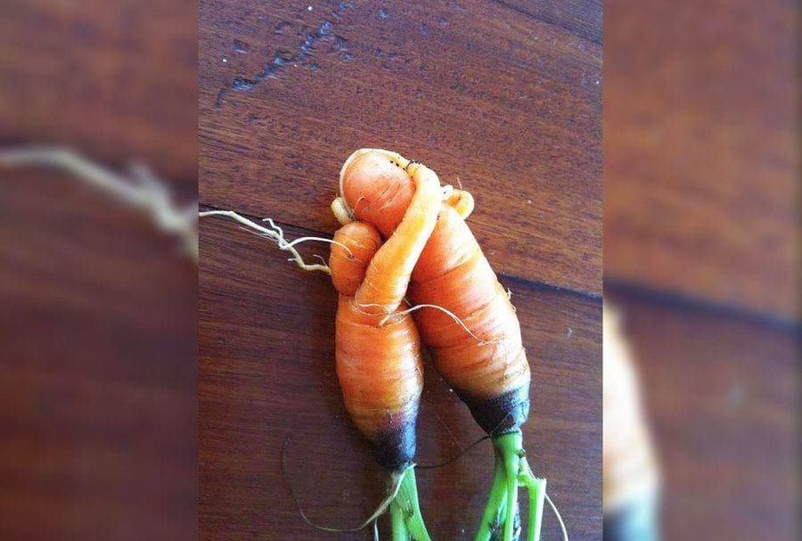 Carrots that look like they are hugging