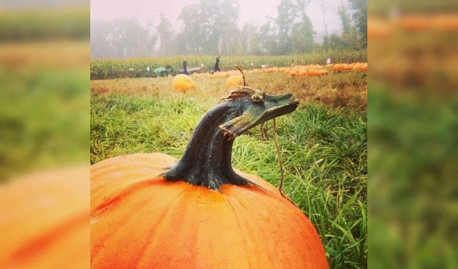 A pumpkin stem that looks like a dragon
