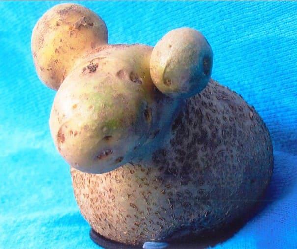 A potato that looks like a sheep