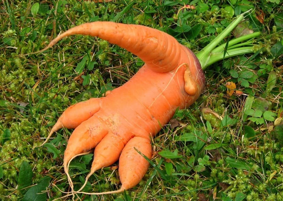 A carrot-shaped just like a foot