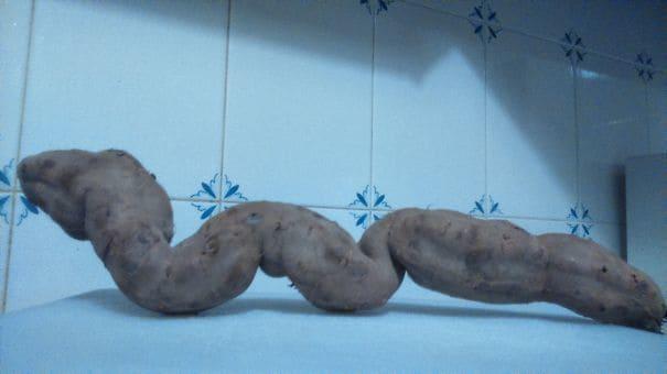 A long sweet potato shaped like a snake