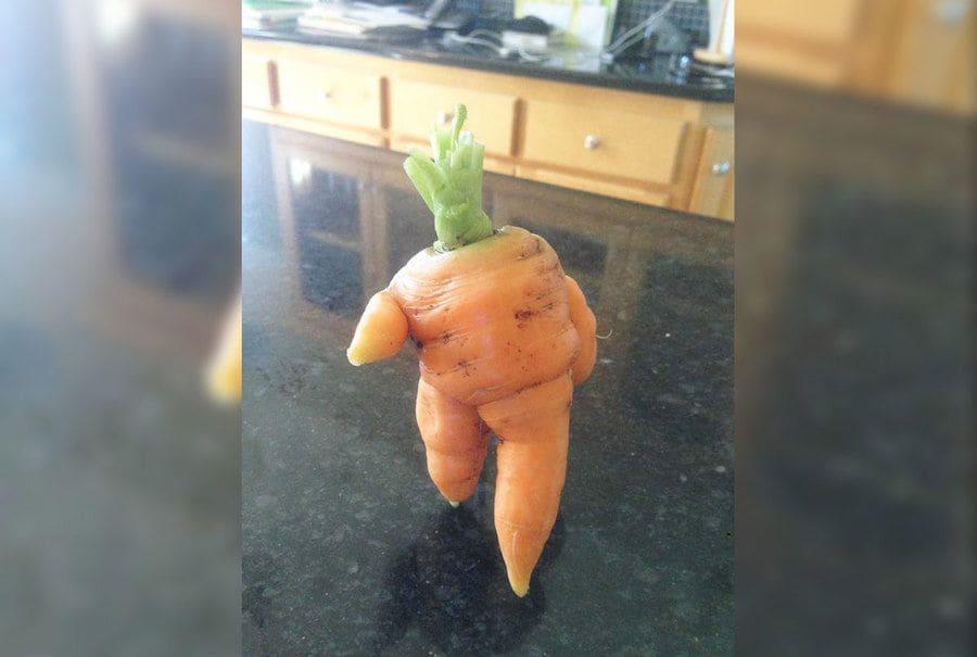 A carrot that looks like it's walking