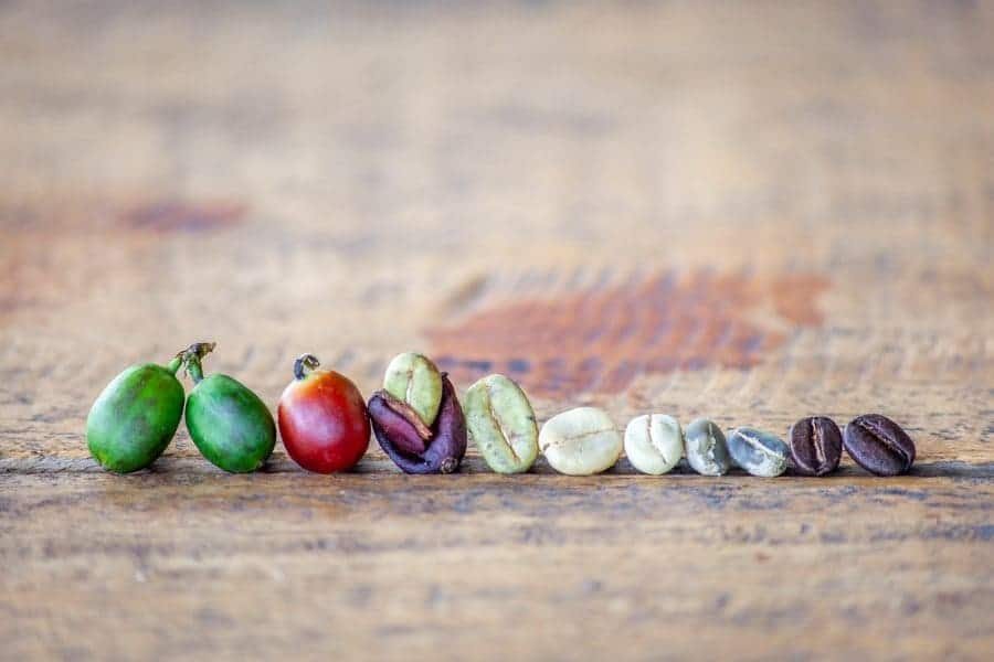 The different stages of coffee beans from picking to roasted