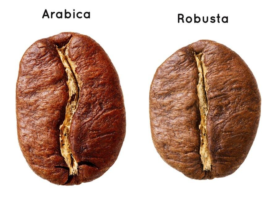 Black Arabica bean versus the Robusta coffee bean