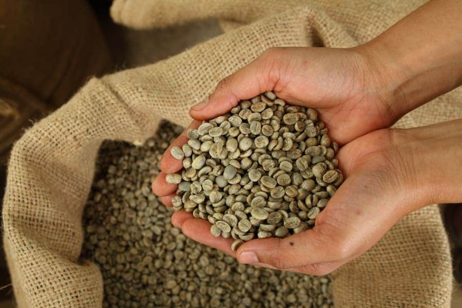 Someone holding green unroasted coffee beans over a large sack