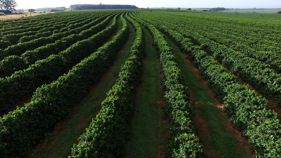 An aerial view of a coffee plantation in Brazil