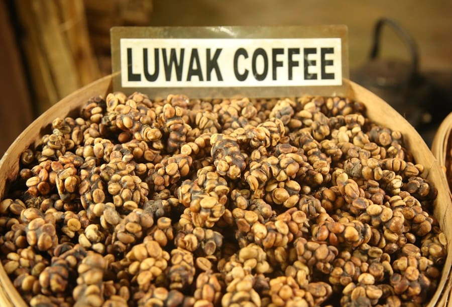 A photograph of Luwak coffee for sale in long bars