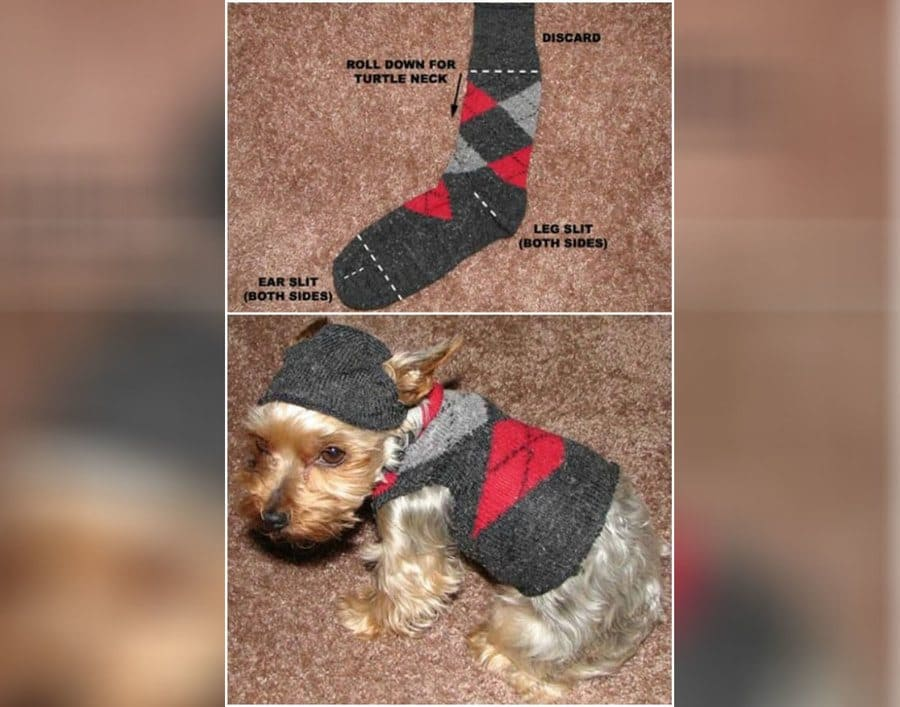 How to make a dog sweater with a sock
