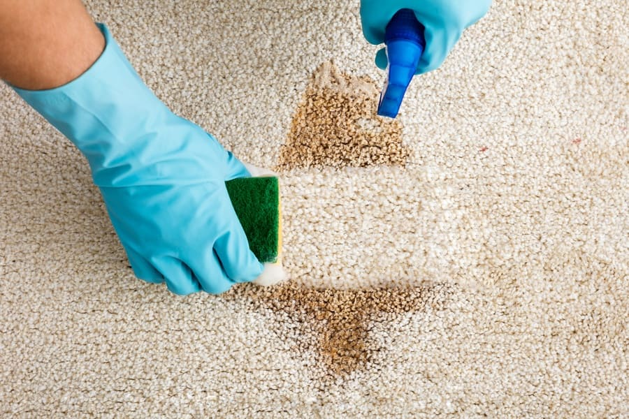 A person spraying vinegar on a carpet to clean it with baking soda.