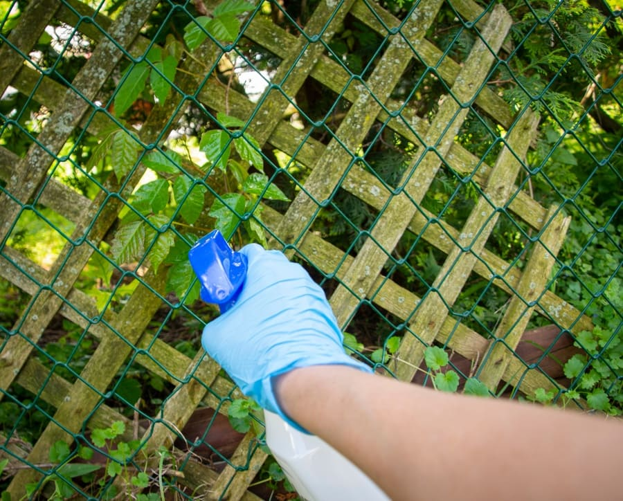 Someone is wearing gloves and using a spray bottle with vinegar to spray the weeds on a fence.