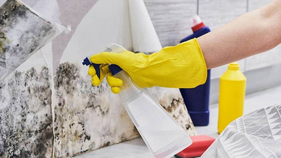 A woman with a glove on spraying the wall of mold with vinegar in a spray bottle with a sponge sitting on the side.