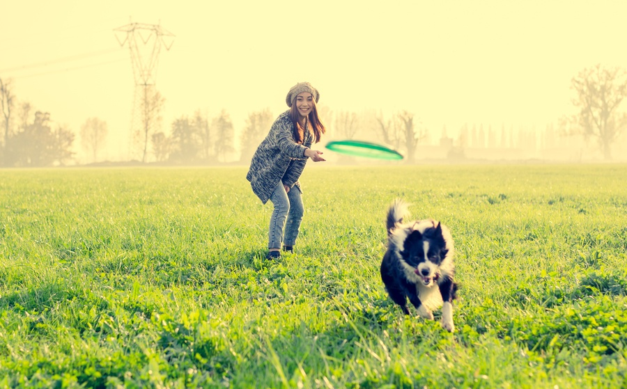 Young beautiful girl throwing to her dog in a park at sunset