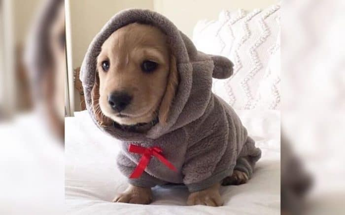 dog with a blanket over his head