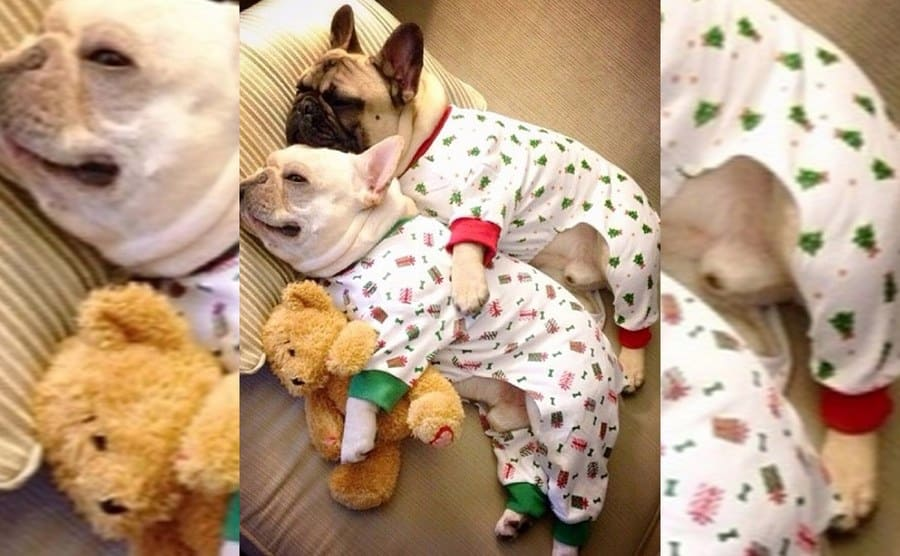 Two French bulldogs in pajamas cuddling with each other and a small teddy bear