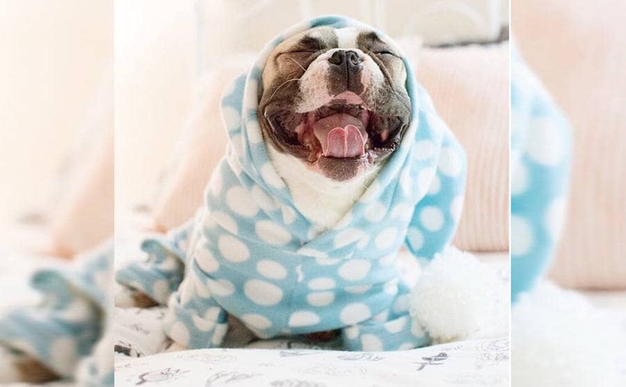 A cute dog wearing a light blue and white polka-dotted fleece pajamas