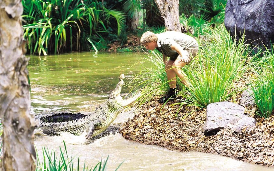 Steve Irwin with a crocodile in a swamp